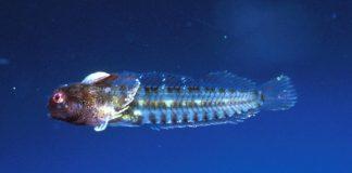 peces que habitan en arrecifes