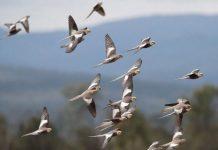 50.000 millones de aves