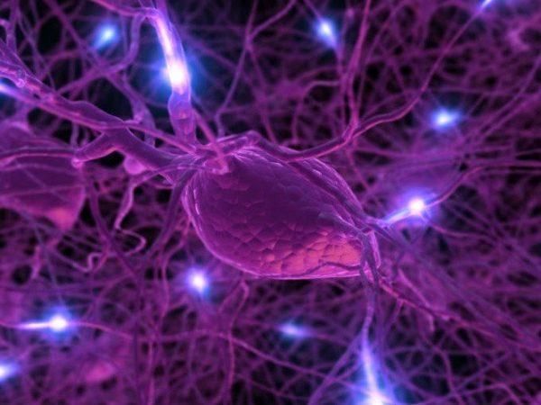 hormona producida en el cerebro