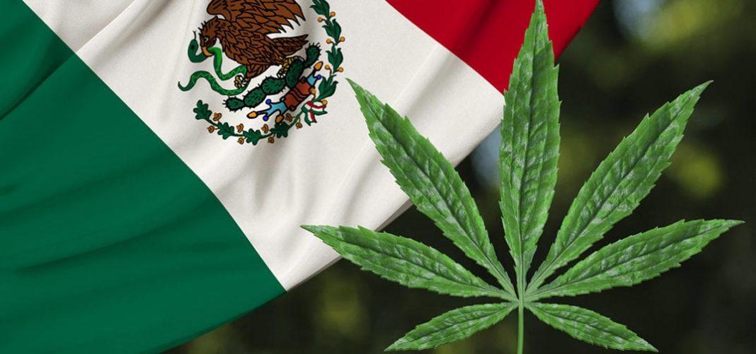 méxico-marihuana 4