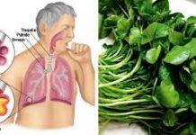 Cómo limpiar los pulmones con remedios naturales
